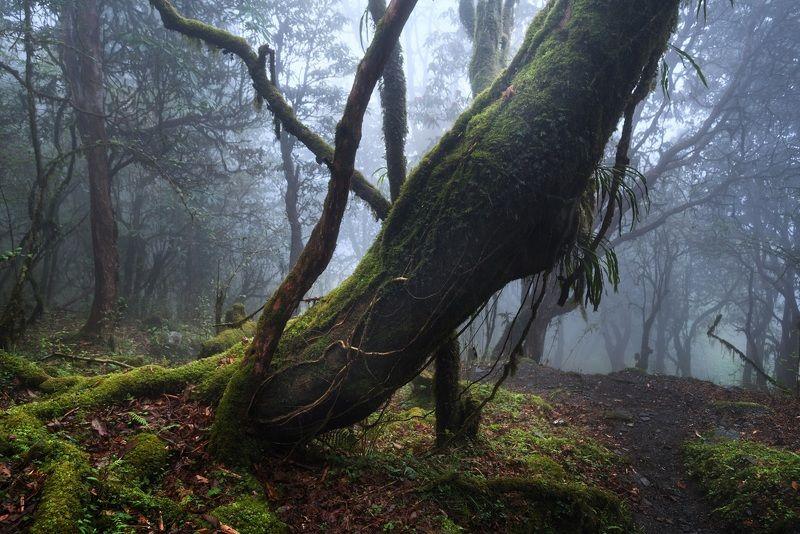 пейзаж, гималаи, непал, аннапурна Туманные тропы к святилищу Аннапурныphoto preview