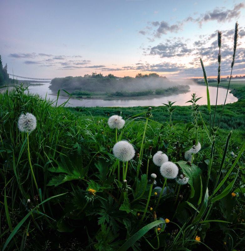 белые ночи, одуванчики, пейзаж, река белые ночи и одуванчикиphoto preview