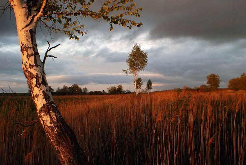 закат, березы банальный закатphoto preview
