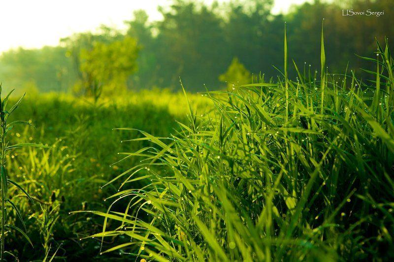утро,роса,трава Утроphoto preview