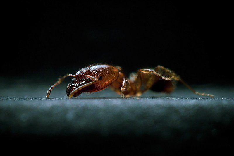 макро, насекомые photo preview