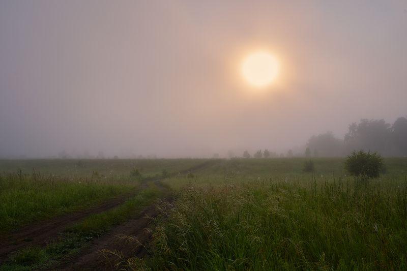 утреннее солнце,рассвет,туман,роса,дорога в степи, я знаю, как проехать к солнцу...photo preview