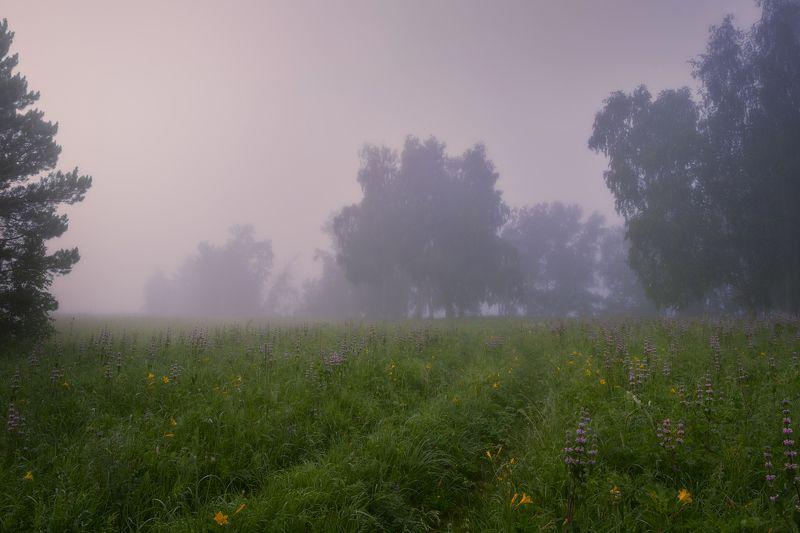 утро,туман,тишина,травы,луга,роса Повстречаться с тишиной photo preview