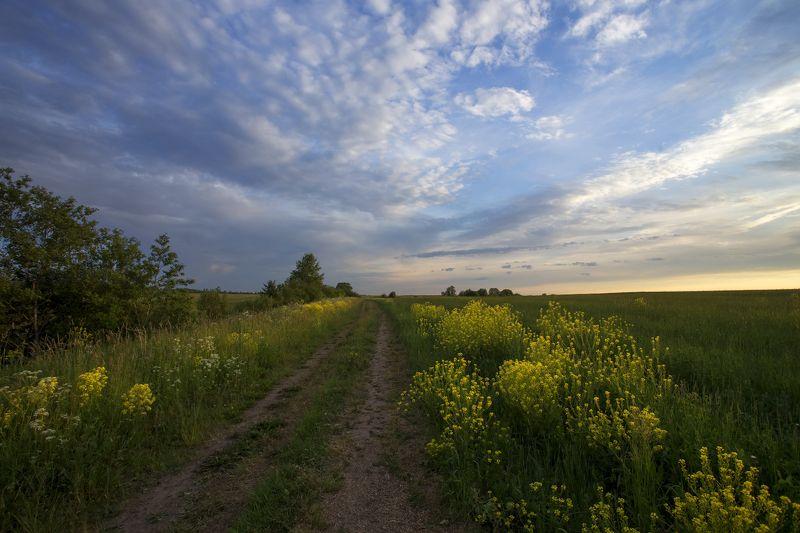 Полевая дорога.photo preview