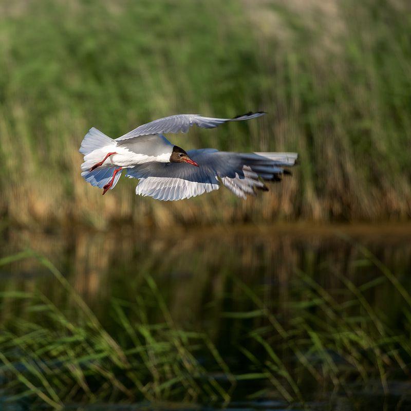 Птичья гавань! #Омскphoto preview