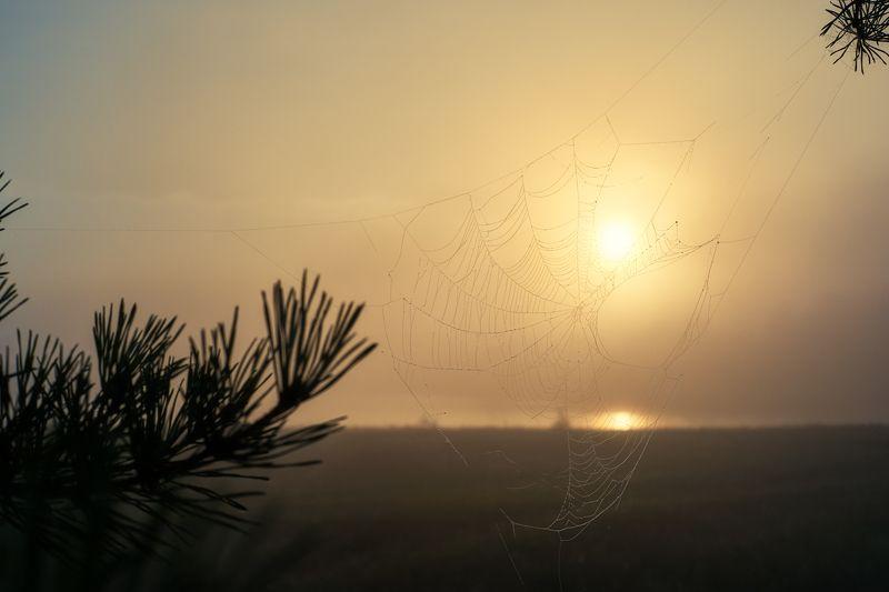 утро, рассвет,туман,берег реки,золотое солнце,паутинка,ветки сосны,morning, dawn, fog, river bank, golden sun, spider web, pine branches, Увидеть новый день...photo preview