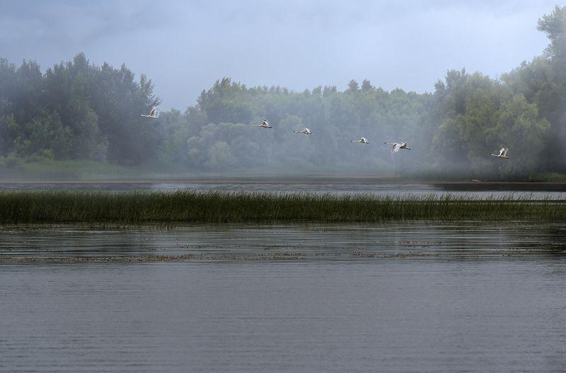 Волга, река, рыбалка, рассвет, Саратов, облака, туман, птицы, камыши Волжские рассветыphoto preview