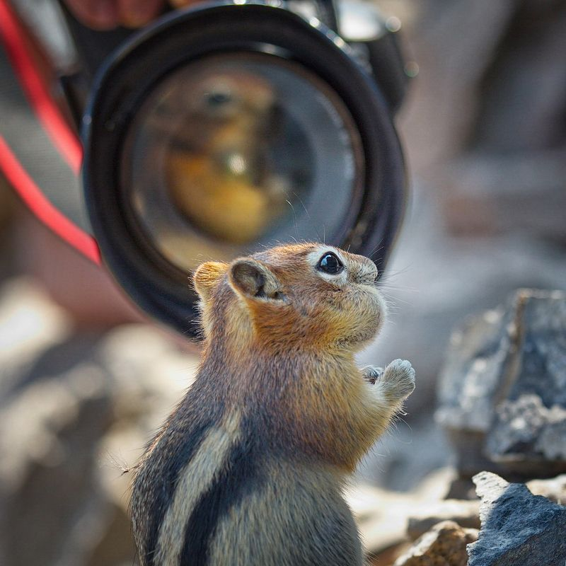 бурундук, животные, природа С Днём фотографа!photo preview