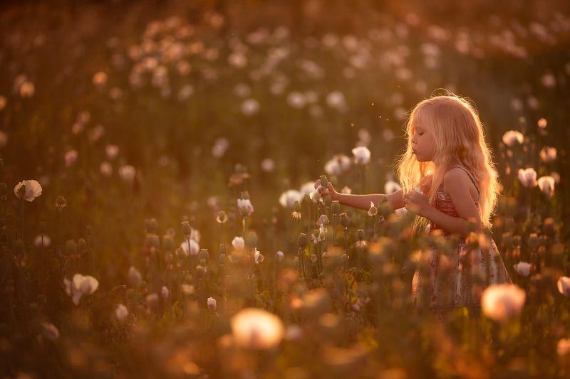 мак, маковое поле, девочка, девочка в маках, закат, закатное, цветы, белые цветы на закатеphoto preview
