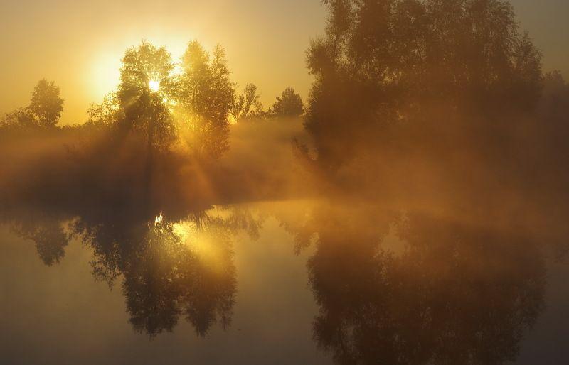 беларусь, лето, полесье, рассвет, тишина, пейзаж, озеро Про утренний светphoto preview