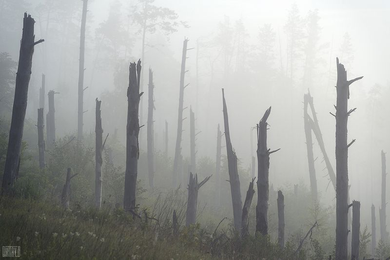 пейзаж, утро, туман, пейзаж, Мертвый лесphoto preview