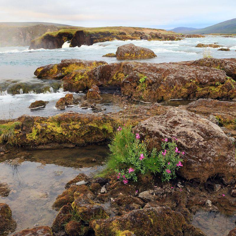 #landscape, #travel, #river, #flover, #пейзаж Цветок у рекиphoto preview