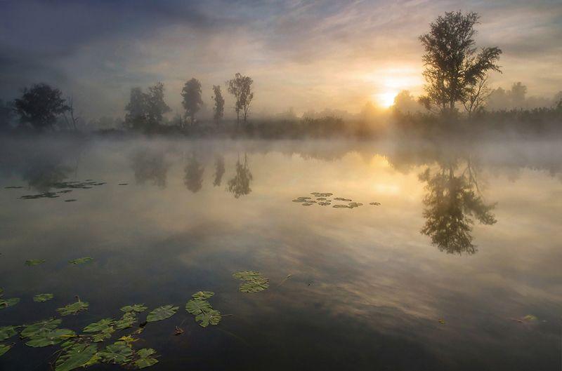 свет, утро, туман, деревья, лучи, солнце, вода, озеро, рассвет Теплое утроphoto preview