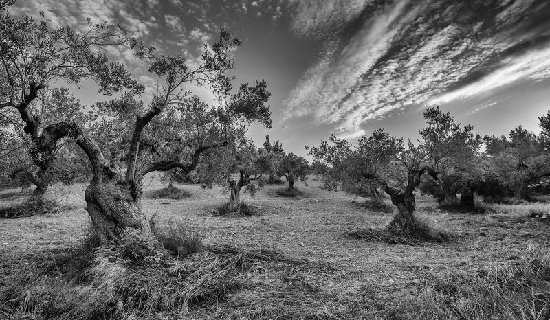 олива гора холм лес Дубы-колдуны... рискованное земледелие в Грецииphoto preview