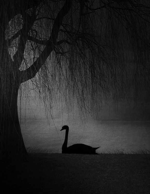 #35photo #surrealart#photoshop#ps_fantasy#art_minimal #bnw_dream #photography#minimalism#conceptual#fineart #instagram#ps_dreams#bnwminimalismmag#art_digital #ir_photographer#ir_aks#minimal#canon#blackandwhite#bnw#surreal#hadimalijani#art#fantastic_earth# Alonephoto preview