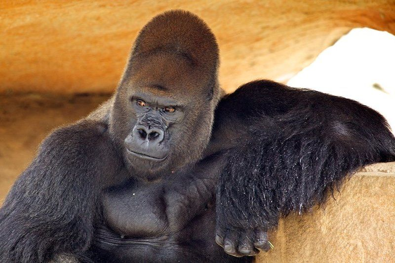animals, zoo, monkey photo preview