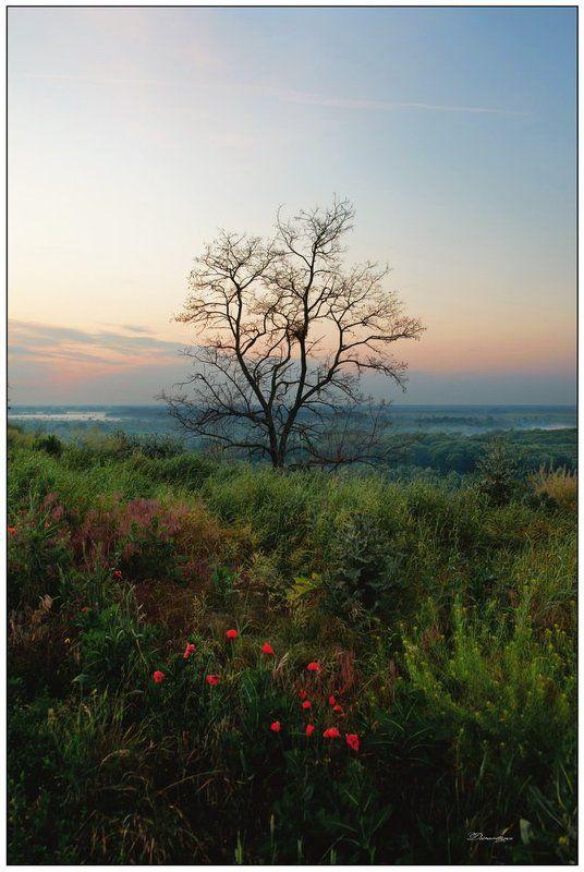 дерево, рассвет photo preview