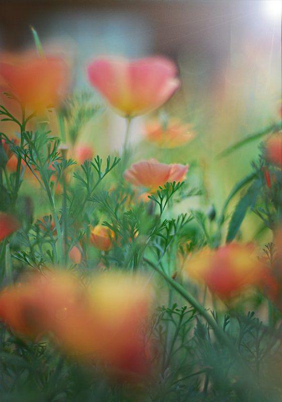 природа, лето, цветы photo preview