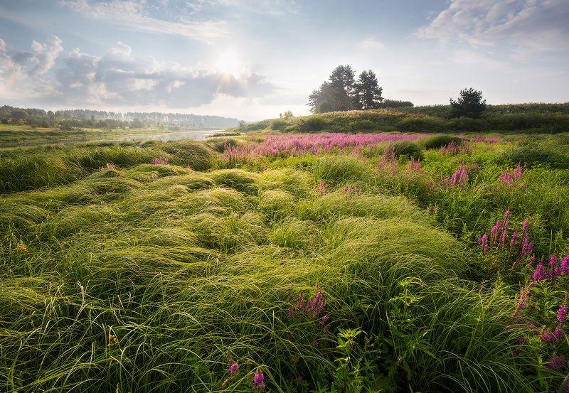 landsacpe, morning, grass, sky, утро, пейзаж Волны травphoto preview