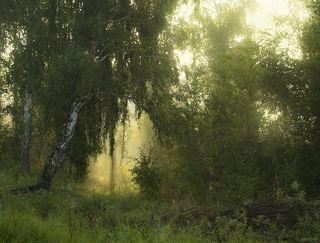 Туман разбавленный солнцем