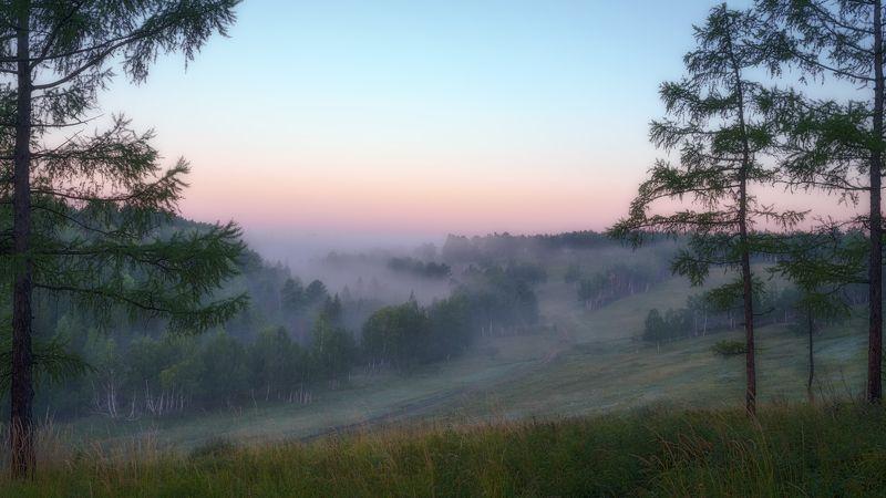 россия , сибирь, природа,раннее утро , туман, лес, берёзы, лиственница. russia, siberia, nature, early morning, fog, forest, birch, larch Утро грибное, утро туманное...photo preview