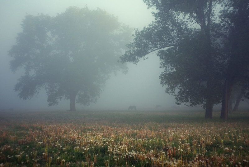 В рассветном туманеphoto preview