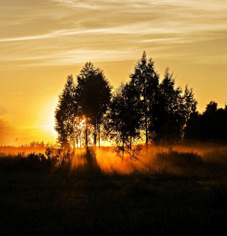 nature, evening, sun, nikon Evening*photo preview