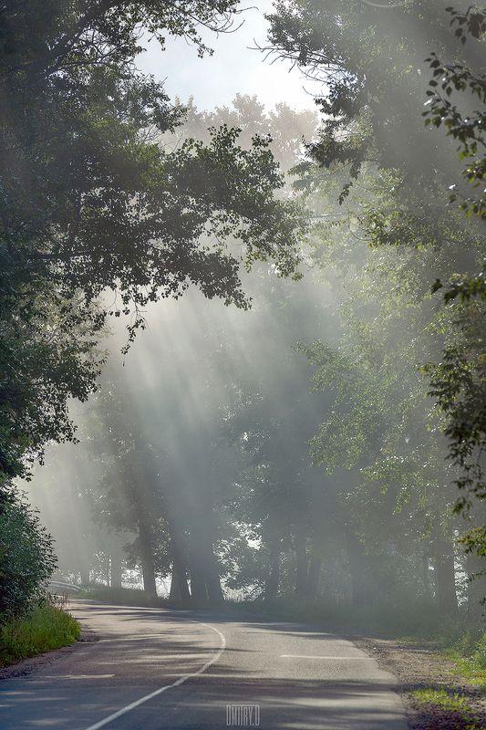 туман, лучи, утро, деревья, дорога, Туман отступаетphoto preview