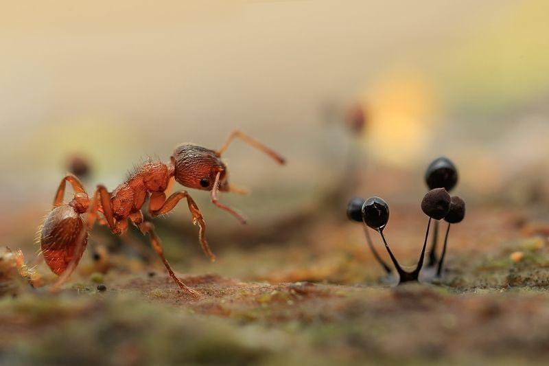 муравей, миксомицеты Озадачен...photo preview