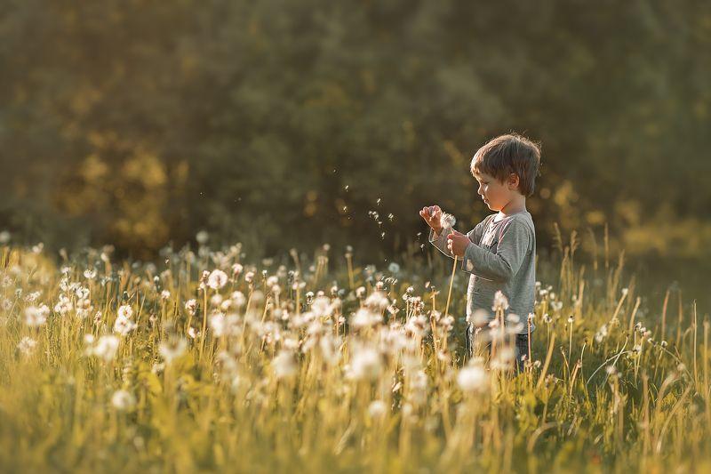 детский портрет, лето, одуванчик Мальчик-одуванчикphoto preview