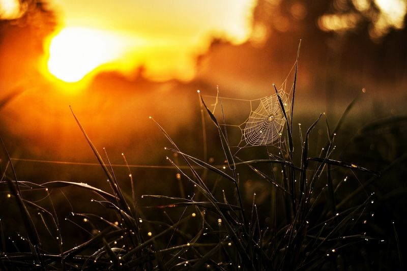 evening, sun, green Eveningphoto preview