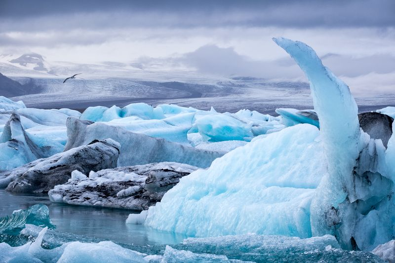 iceland,frozen,glacier,lake,winter,bird,forms Ice9photo preview