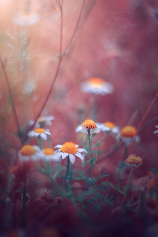 pink,white,bokeh,light,nature,flowers, Pink and Orangephoto preview
