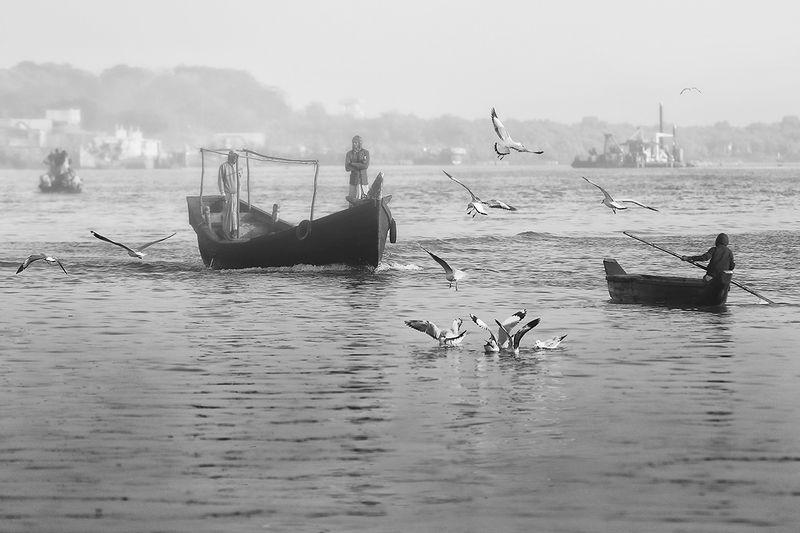 бангладеш, рыбаки, лодка, чайки, промысел, рыбалка, утро, рано Ранним утромphoto preview