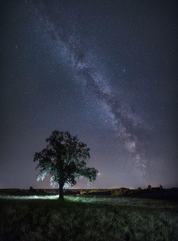 Млечный путь и одинокий дуб.photo preview