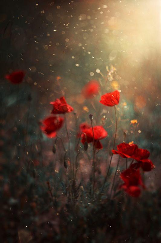 red,flowers,nikon,nature,bokeh,orange,light,dark,dust, Redphoto preview