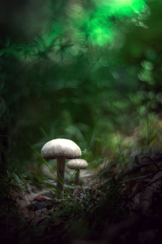 white,green,bokeh,nature,season,mushroom Greenphoto preview