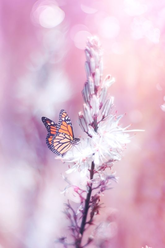 White,pink,flowers,butterfly,ligth,bokeh,nature, Pink and Whitephoto preview
