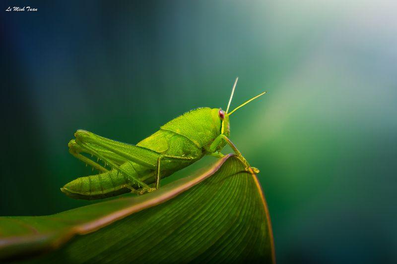 grasshopper Grasshopperphoto preview