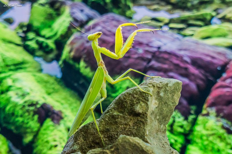 mantis Top of the worldphoto preview