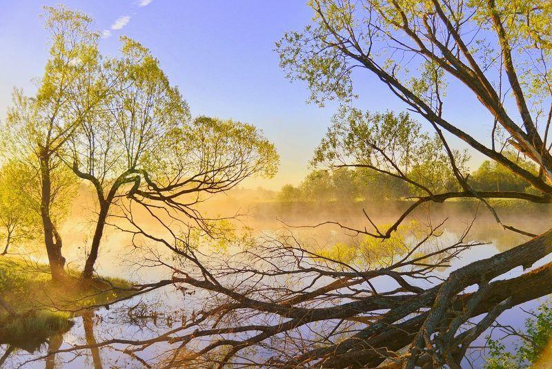 пейзаж, лето, деревья, туман, ветви, май, у воды, отражения Утро красит нежным светом.photo preview