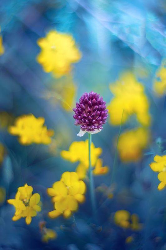 bokeh,yellow,blue,violet,purple,light,nature,garden,nikon,daylight,season, Blue and Yellowphoto preview
