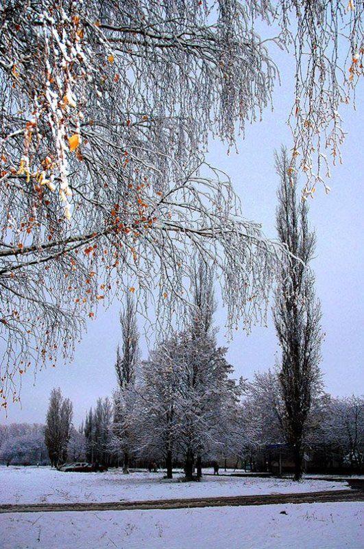 осень, тополя, берёзы, вспышка, разумов Второй снегphoto preview