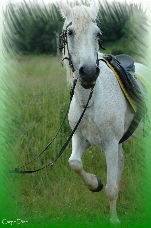 белая, лошадь, конь If you wanna ride, ride a white horsephoto preview