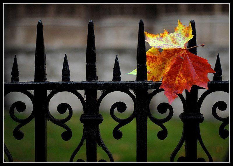 uk Осенний этюдphoto preview