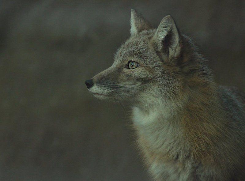 в мире животныхphoto preview