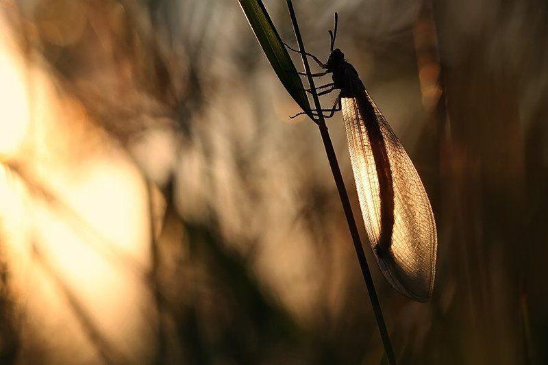 муравьиный лев, закат photo preview