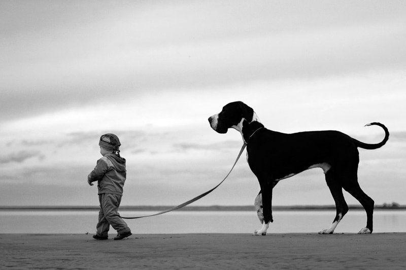 дог, море, немецкий, ребёнок, Собака photo preview