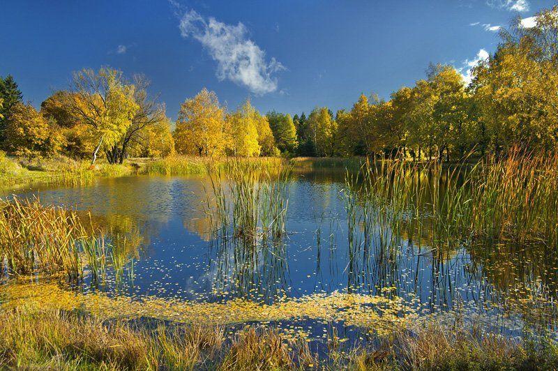 autumn, golden, nature. trees. krusev. landscape Autumn colorsphoto preview