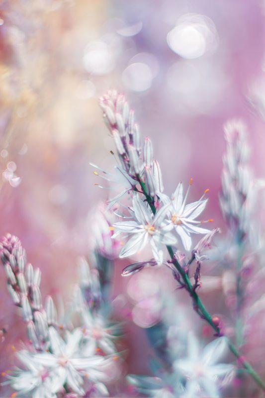 PInk,white,nikon,bokeh,flowers,garden,season,spring, Pink and Whitephoto preview